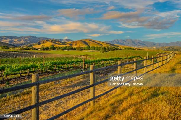 spring vineyard in the santa ynez valley santa barbara, ca - paesaggio collinare foto e immagini stock