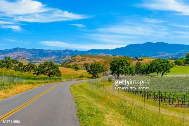 spring vineyard in the santa ynez valley santa barbara, ca(p) - napa california stock photos and pictures