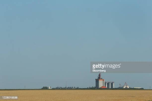 Spring wheat grows in a field in front of a Richardson Pioneer Ltd grain elevator near Brunkild Manitoba Canada on Tuesday Aug 11 2020 Wheat...