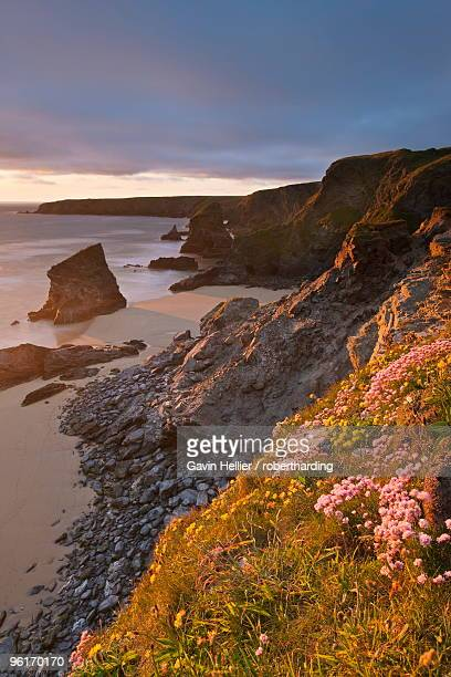 spring wildflowers on the clifftops overlooking bedruthan steps, north cornwall, england, united kindom, europe - gavin hellier stock pictures, royalty-free photos & images