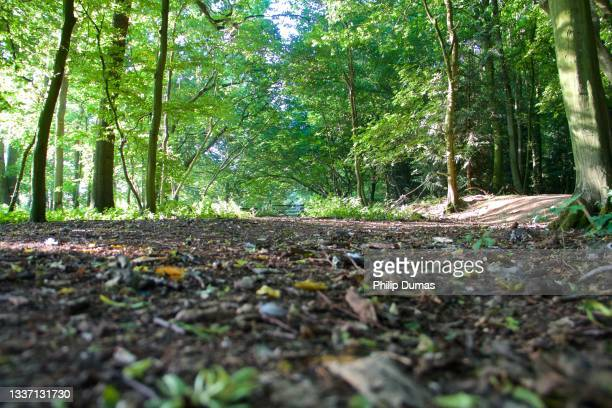 spring woodland trail - national wildlife reserve stock pictures, royalty-free photos & images