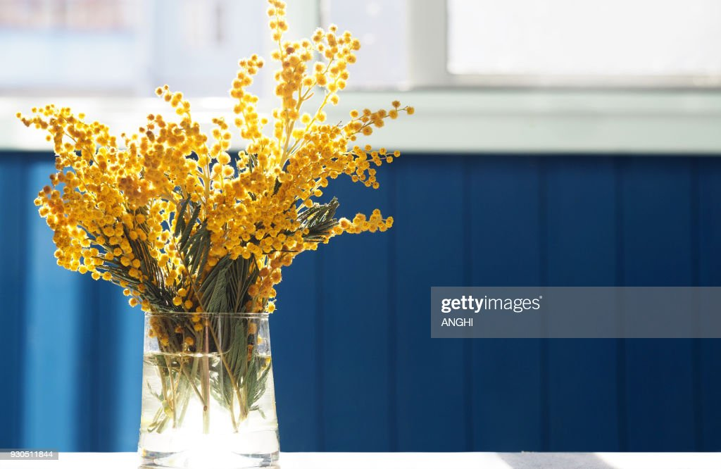 Spring yellow mimosa flowers. Acacia dealbata, silver wattle or mimosa in glass vase on table close-up, against background of the window. Flower spring background, 8 March, Easter. Sun rays, backlight : Stock Photo