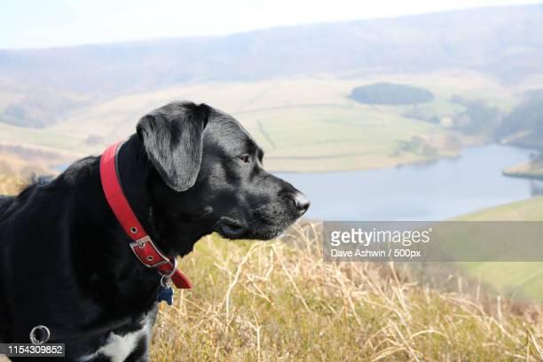 springador dog - dave ashwin stock pictures, royalty-free photos & images
