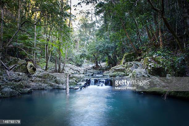 springbrook national park currumbin rock pools - standing water stock pictures, royalty-free photos & images