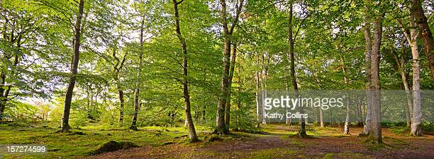 Spring/early summer woodlands