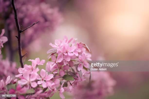 spring's bounty - dustin abbott imagens e fotografias de stock