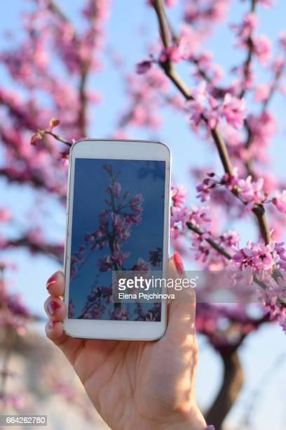springtime captures - elena blume stock-fotos und bilder