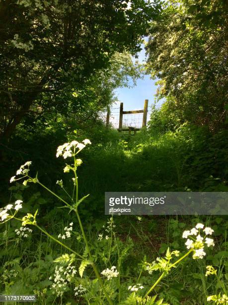 springtime country walk along footpath - springtime stock pictures, royalty-free photos & images