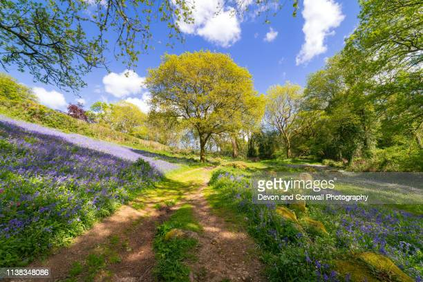 springtime dartmoor - bluebell stock pictures, royalty-free photos & images