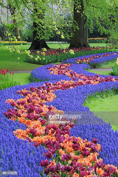 springtime garden design. - keukenhof gardens stock pictures, royalty-free photos & images