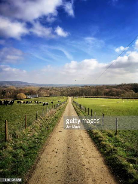 springtime gravel track perspective through farmland - surrey england stock pictures, royalty-free photos & images