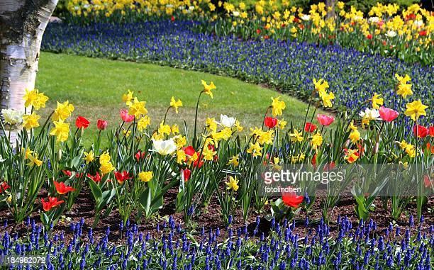primavera in un parco - bicolore colore foto e immagini stock