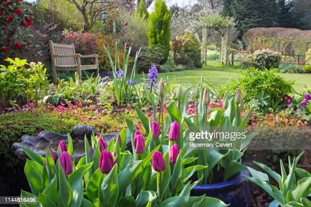 springtime in english domestic garden. - lawn stock pictures, royalty-free photos & images