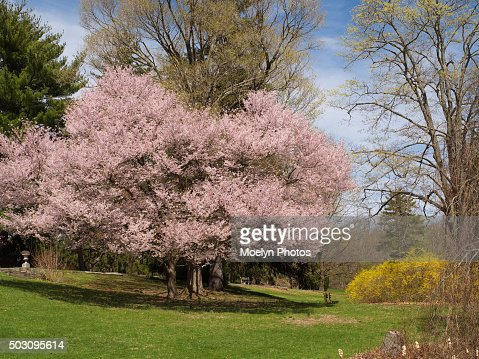 springtime in ringwood manor state parknj stock photo getty images