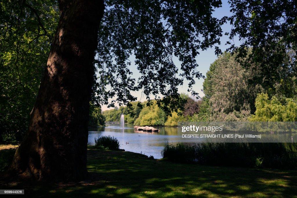 Springtime in St James's Park, Westminster, London : Stock-Foto