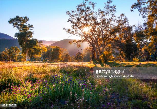 springtime in the ikara national park. southern flinders ranges, south australia - south australia stock photos and pictures