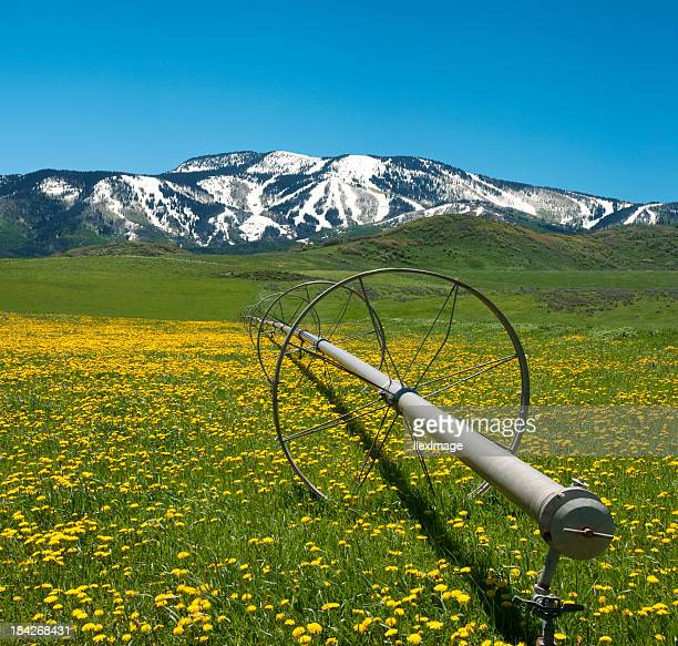 a primavera em rockies - steamboat springs colorado - fotografias e filmes do acervo
