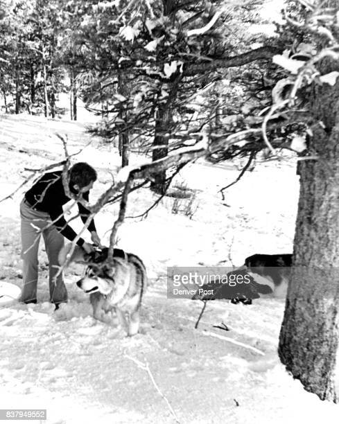 Springtime Is Still Dog Sledding Time [ Denver commuters might disagree but an April snowstorm can be an excuse to have some rollicking fun...