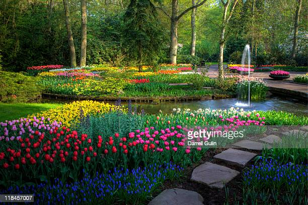 springtime keukenhof gardens with pathway - keukenhof gardens stock pictures, royalty-free photos & images