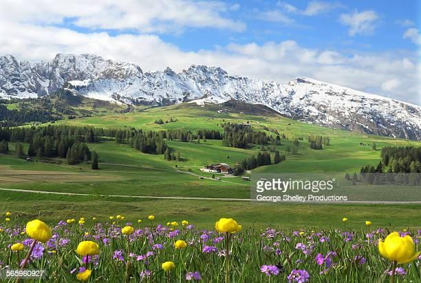 springtime meadow in alpe di siusi - dolomiten stock-fotos und bilder