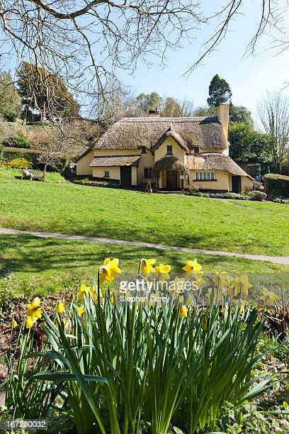 Springtime on Exmoor, Selworthy, Somerset UK