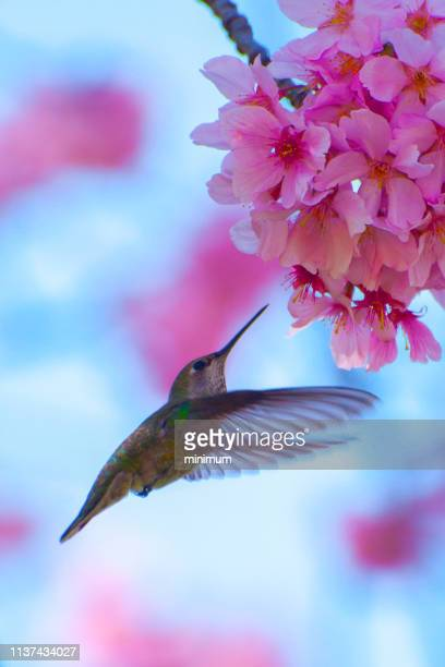 springtime - tropical bird stock pictures, royalty-free photos & images
