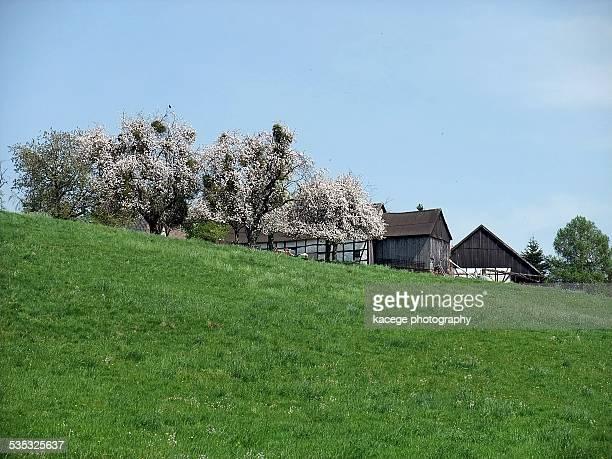 springtime - ハーフティンバー様式 ストックフォトと画像