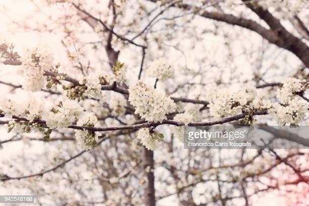 springtime - tempio pausania stock-fotos und bilder