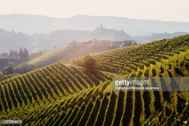springtime vineyards and landscape at sunset. langhe, piedmont, italy - iacomino italy foto e immagini stock