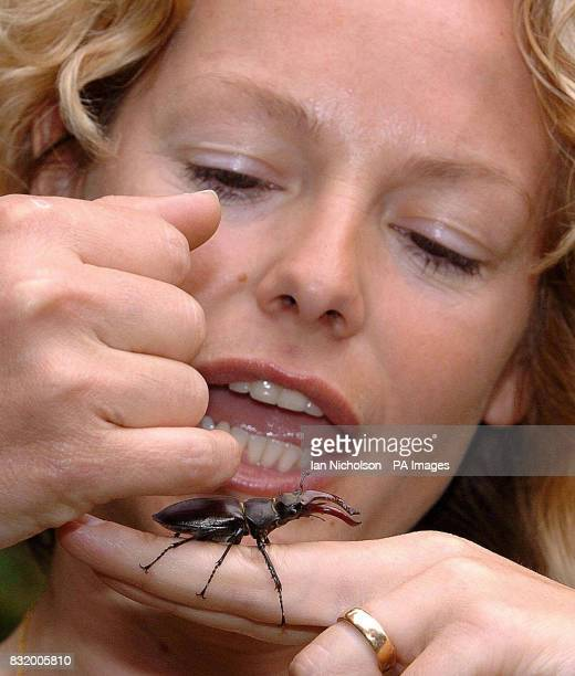 BBC Springwatch presenter Kate Humble handles a male Stag Beetle at the launch today of National Insect Week at London's Natural History Museum