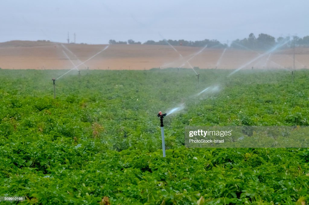 Sprinkler irrigation : Stock-Foto