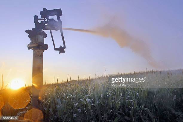 A sprinkler sprays a field as drought conditions continue to plague southern France August 4 2005 in Castelnaudary France The lack of rain coupled...