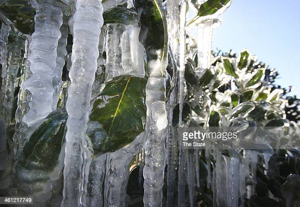 A sprinkler system left on by mistake creates ice sculptures on Graces Way in Columbia SC Tuesday Jan 7 2014
