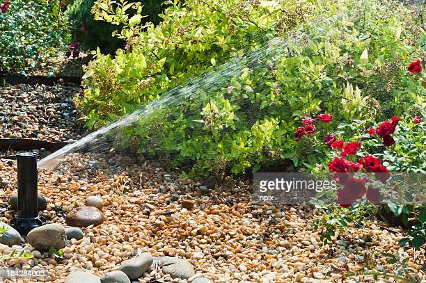 A sprinkler that is watering the plants during the day