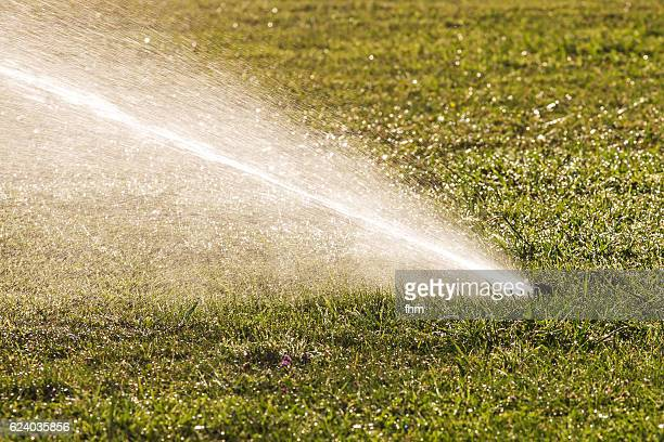 sprinkler watering grass - sprinkler system stock pictures, royalty-free photos & images
