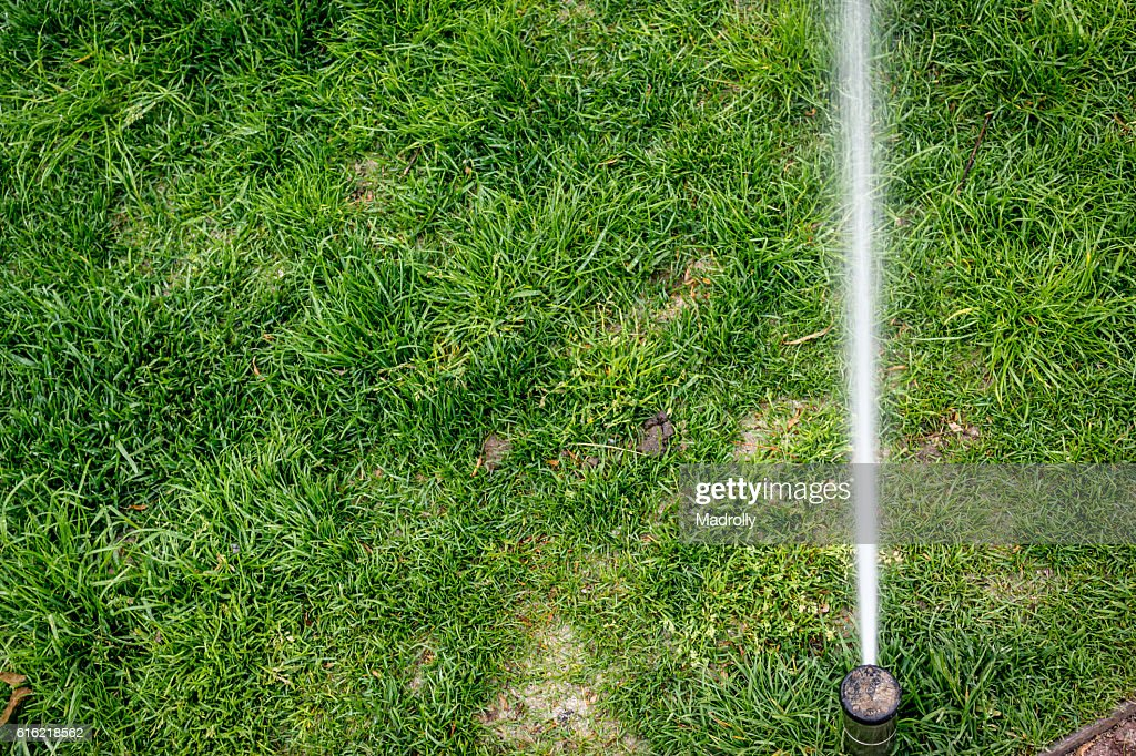 Sprinkler watering : Stock Photo