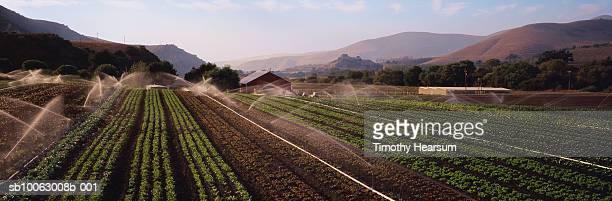 sprinklers watering vegetable fields - timothy hearsum bildbanksfoton och bilder