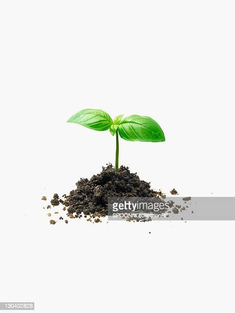 Sprout and Soil