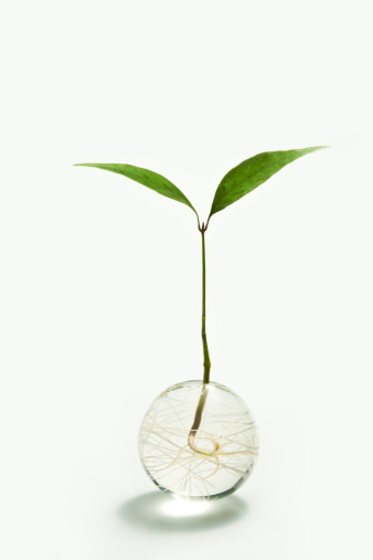 sprout growing  in the globe - gettyimageskorea