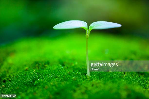 sprout growing - seedling stock pictures, royalty-free photos & images
