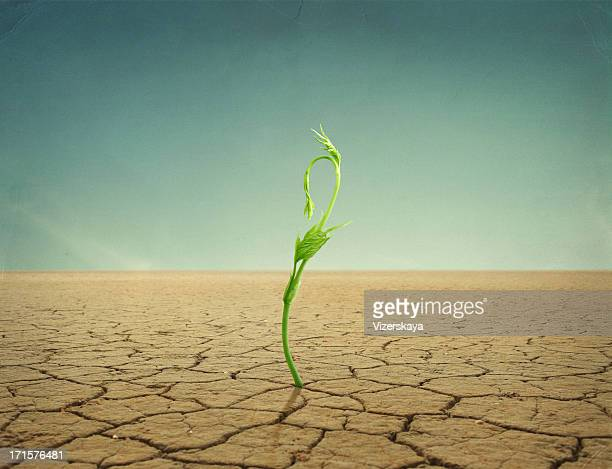 sprout in desert - land stock pictures, royalty-free photos & images