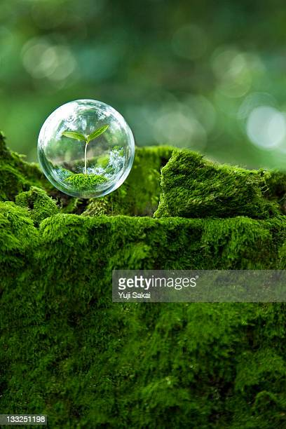 sprout inside  globe  in the air - moss stock pictures, royalty-free photos & images