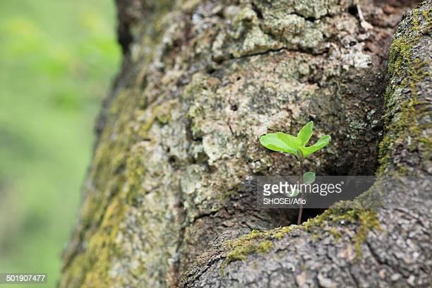 sprouting leaves - 四月 ストックフォトと画像