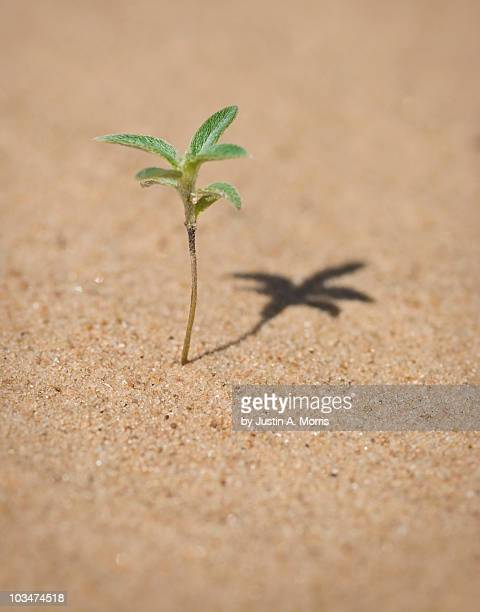 Sprouting plant in sand dune