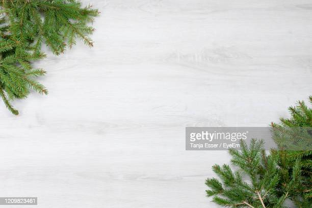 spruce branches on white wood - white wood stock pictures, royalty-free photos & images