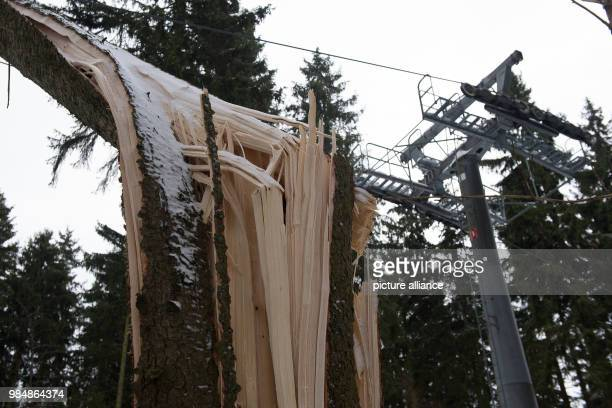 A spruce has been snapped off at the Wurmberg cableway by the Upper Harz in Braunlage Germany 19 January 2018 The winter storm Friederike uprooted...