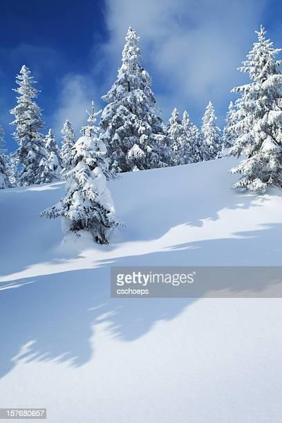 Spruce Winter Forest II