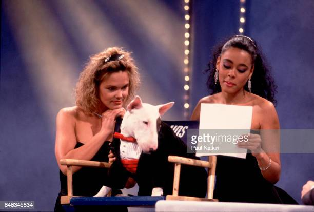 spuds mackenzie stock photos and pictures getty images