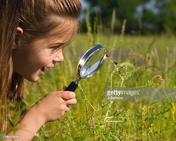 I Spy A Ladybug