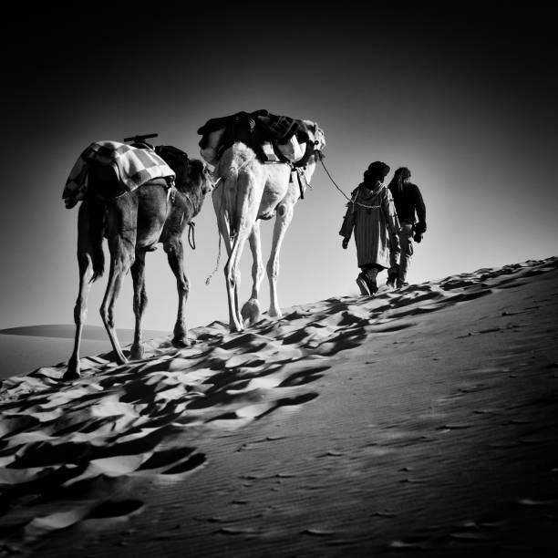 square black & white image of 2 men and 2 camels in Sahara desert
